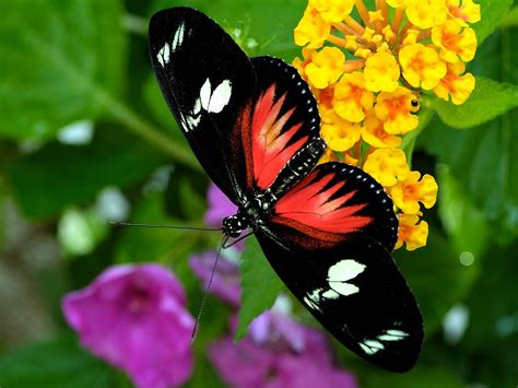 Flowers Free Sul i you earth butterfly quotes