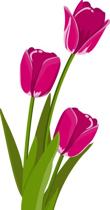 free vector graphic flower tulip tulpenbluete free image on pixabay 2923492