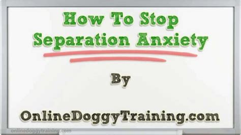 how to a with separation anxiety how to stop separation anxiety tips
