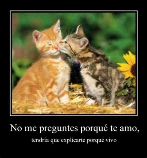 imagenes romanticas de gatos no me preguntes porque te amo tendr 237 a que explicarte