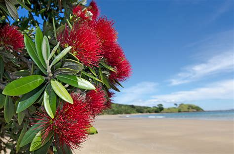 images of kiwi christmas it s a two tails kiwi christmas