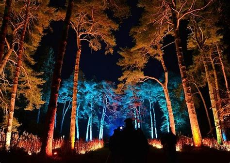 enchanted christmas lights picture of westonbirt