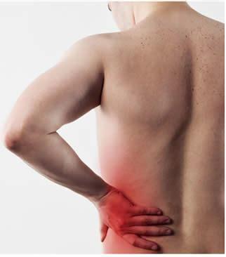 organi interni corpo umano lato sinistro