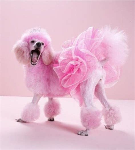 how to get dog hair off comforter best 25 dog hair dye ideas on pinterest pink poodle