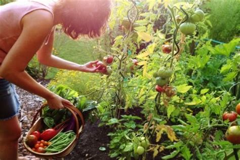Vegetable And Fruit Garden Gardening Questions Answers To Vegetable Fruit And Herb