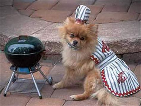 bbq dogs summer barbecue ideas for the whole family bark and swagger