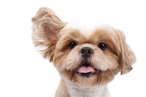 full service dog grooming green dog wash adorable dogs grooming spa full service dog grooming in