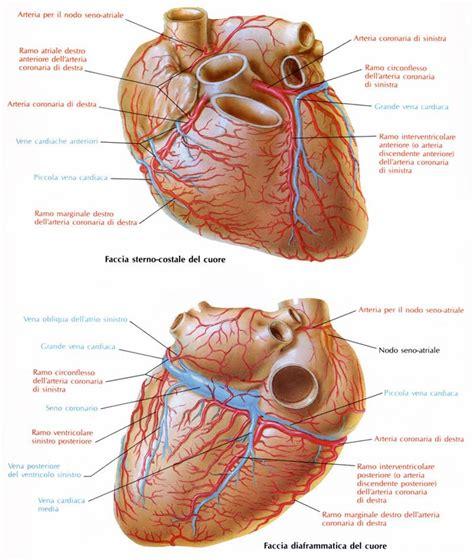 bitest ecografia interna o esterna la cardiopatia ischemica studio cardiologico botoni