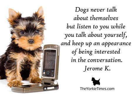 find a yorkie terrier listener