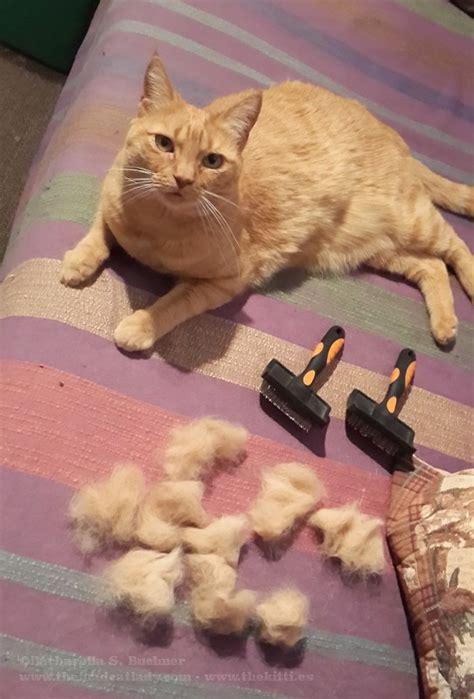 cats shedding fur images