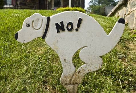 how to get dog to stop pooping in the house when do dogs stop puppy biting guard dog training knoxville tn stop dogs eating poop