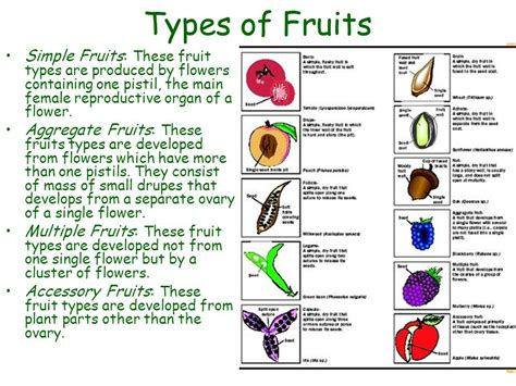3 fruit types four types of fruit simple aggregate and