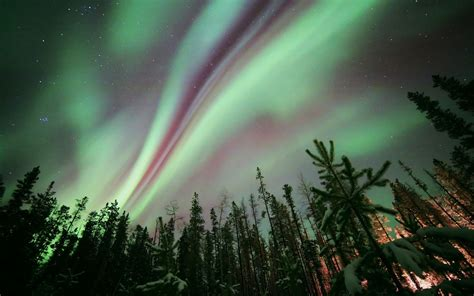 wallpaper northern lights night forest trees stars