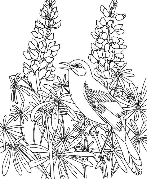 garden plant coloring pages top 10 crow coloring pages for your toddler mockingbird