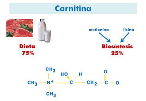 alimenti con carnitina 191 qu 233 los defectos metabolismo de la carnitina