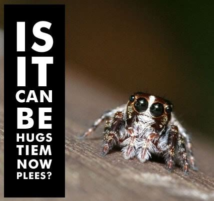 Cute Spider Memes - my favorite cute spider meme