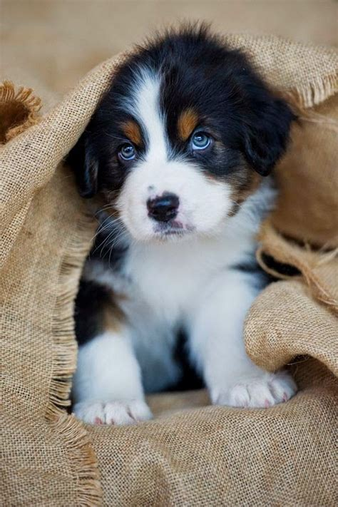 cutest breeds 25 best ideas about cutest breeds on puppies puppies puppies and