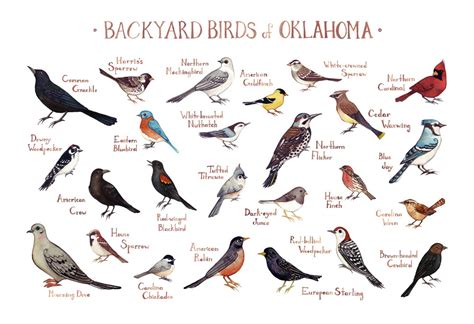 backyard birds north carolina 2017 2018 best cars reviews