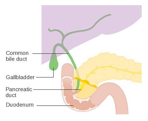 diagram of bile duct system original file svg file nominally 341 215 276 pixels