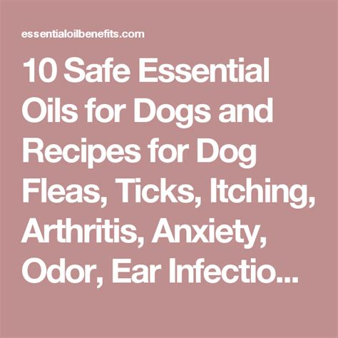 essential oils safe for dogs 10 safe essential oils for dogs and recipes for fleas ticks itching arthritis