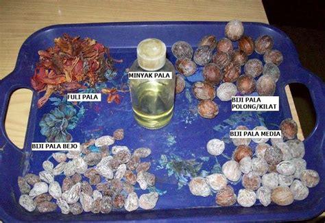 Minyak Atsiri Pala essential corner engineered essential