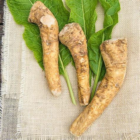 gurneys horseradish hybrid  bareroot vegetable plant