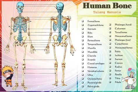 Kerangka Manusia gambar kerangka manusia galuh peraga