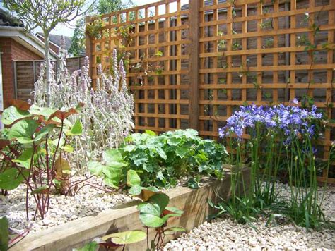 shade loving climbing plants garden planting surrey hshire ash vale aldershot