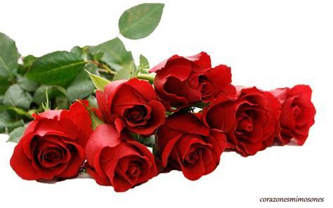 flores rojas wallpaper rosas 900 13