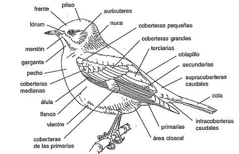 aves de espaa nombres propios