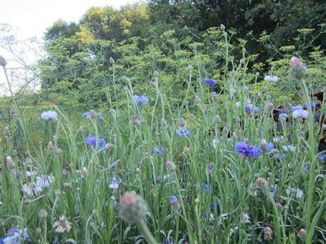 high tea bloemen plukken bloemen pluktuin stoutenburg