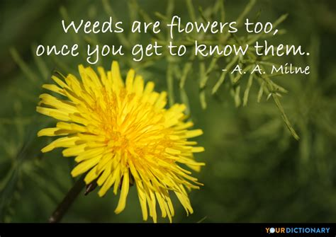 Withering Flower Quotes