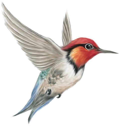 imagenes de aves sin fondo клипарты птиц в png фотоальбом персональный сайт vikont