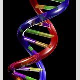 Biology Dna Clipart | 1024 x 1130 jpeg 306kB