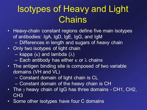 heavy chain light chain antibody structure and the generation of b cell diversity
