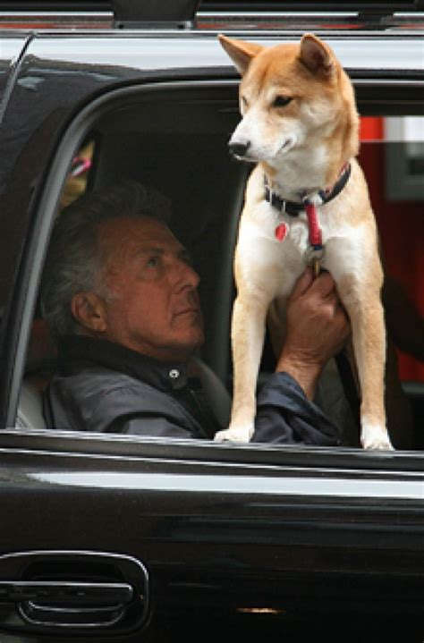hoffman dogs and their dogs dustin hoffman goodtoknow