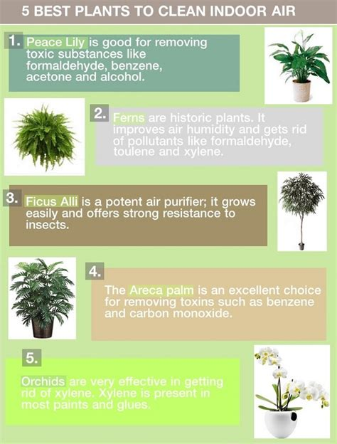 indoor plants to clean air 5 very best houseplants for air purification interior