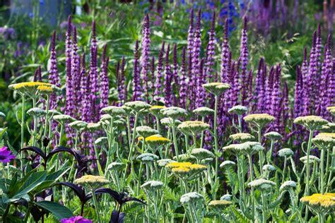 stauden pflanzen stauden farben und formkontraste gartentechnik de