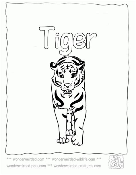 missouri tiger coloring page baby tiger coloring pages coloring home