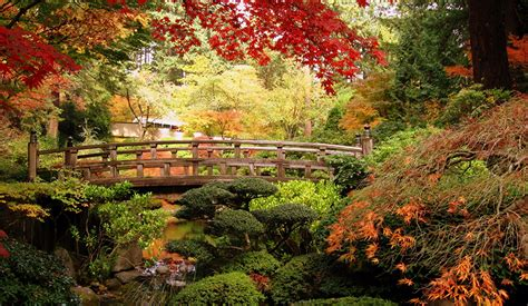 fonds decran jardins ponts usa portland japanese erable nature telecharger photo