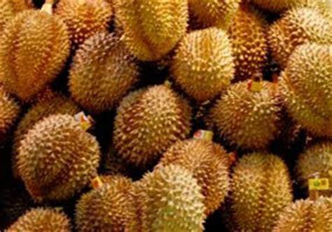 kumpulan budidaya budidaya durian