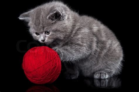 who plays cat cat plays with a of yarn stock photo colourbox