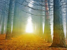 late fall forest light wp tw harmonia philosophica