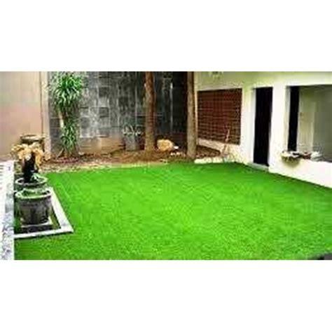 Bibit Biji Rumput Gajah Mini jual tukang taman 02199213432 jual biji rumput benih