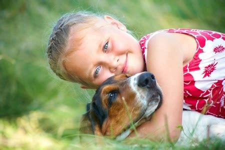 chemotherapy for dogs cost canine lymphoma chemotherapy canine lymphoma