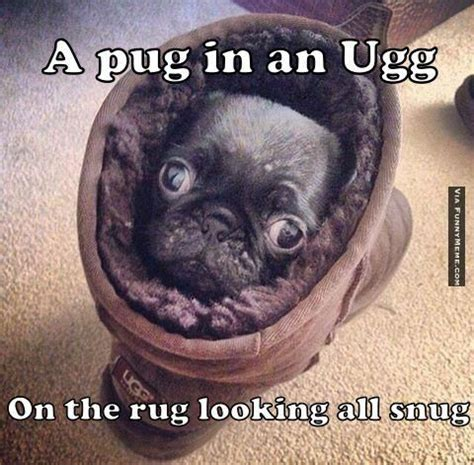 Pug Memes Best 25 Pug Meme Ideas On Pug Puppies Miss
