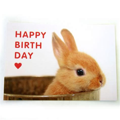 Simple Birthday Card Monochrome Rabbit Set happy birthday rabbit card www pixshark images galleries with a bite