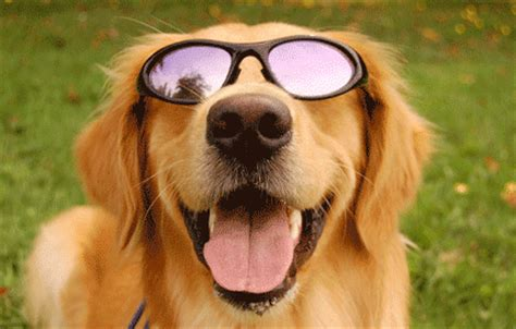 sunglasses for dogs sunglasses for dogs