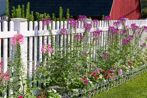 flower garden fencing annual flower garden with fence plant flower stock