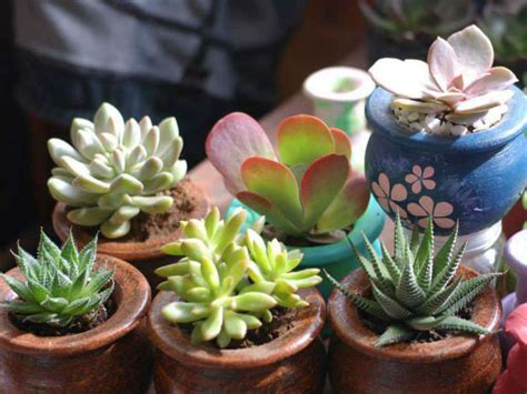 easy tips on how to grow succulents world of succulents
